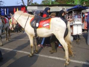 Tersedia wisata kuda
