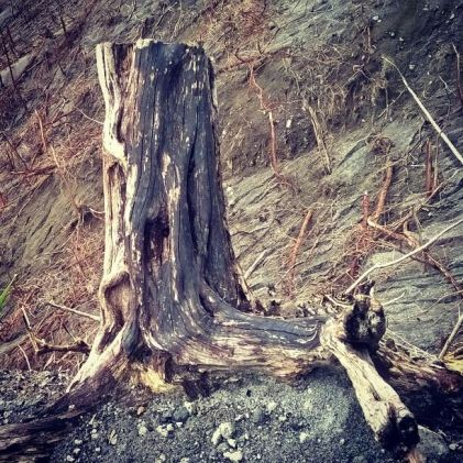 Pohon yang rsak, sumber: Grup WA QC