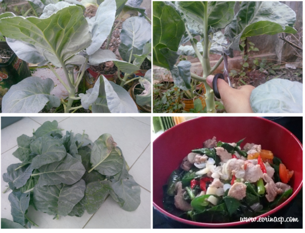 Budidaya sayuran pekarangan