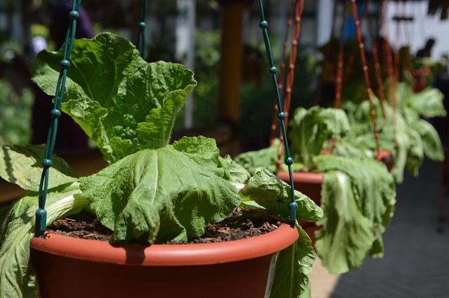 Taman Agro Inovasi