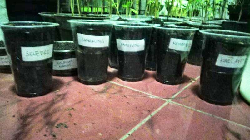 bibit-tanaman